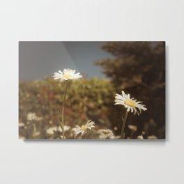 Daisy Flower 2 Metal Print