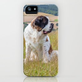St Bernard with a view iPhone Case