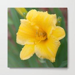 Yellow Daylily by Teresa Thompson Metal Print