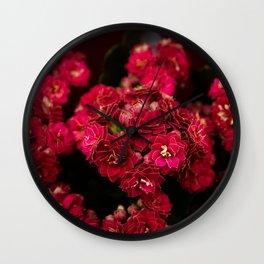 Beautiful macro of a flower, kalanchoe Wall Clock