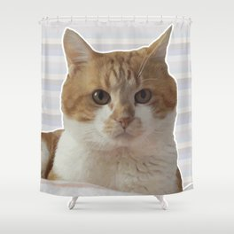 Red cat on a striped background. Shower Curtain