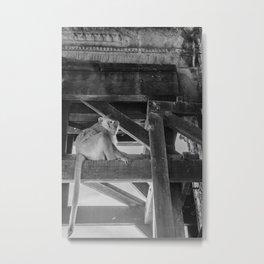 Angkor Wat Long-Tail Macaque (Monkey), Cambodia Metal Print