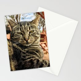 Big Boi (Lanai Cat Sanctuary) Stationery Cards
