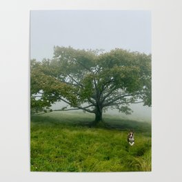 Duke at Craggy Gardens Poster