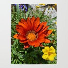 Summer flowers II Poster