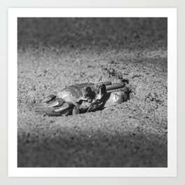 Atlantic ghost crab on the beach sand Art Print