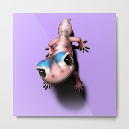 Knob tailed Gecko Metal Print