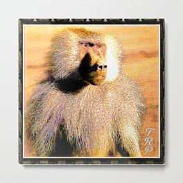Primate Models:: Hamadryas baboon 01 Metal Print