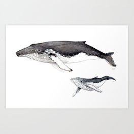 North Atlantic Humpback whale with calf Art Print