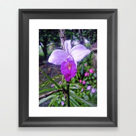 ORCHID 2  Framed Art Print