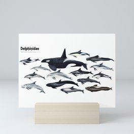 Delphinidae: Dolphin family Mini Art Print