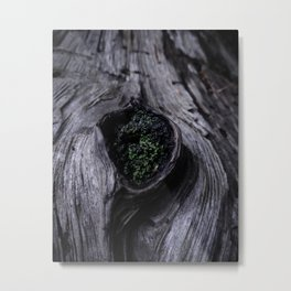 A Knot in a Log Metal Print