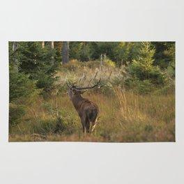 Red deer, rutting season Rug