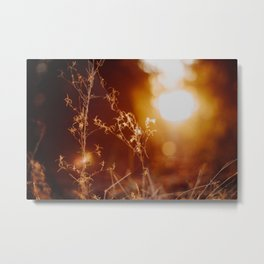 Golden Hour (3) Metal Print