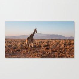 Giraffe admiring the savannah in South Africa Canvas Print