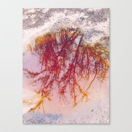 Puddle of tree... or mud Canvas Print