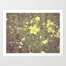 buttercups galore Art Print