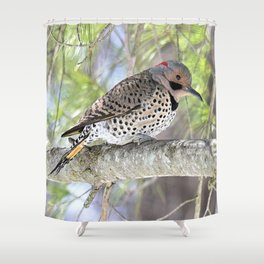 Northern Flicker Woodpecker Showing His Colors Shower Curtain