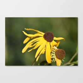 Yellow Whispers Canvas Print