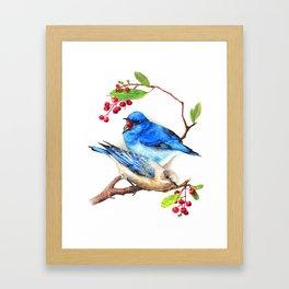 Mountain Blue Bird Framed Art Print