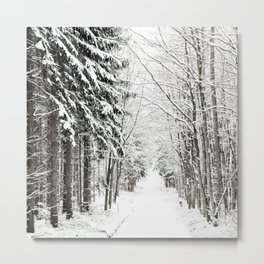 canopy of snowy branches Metal Print