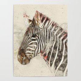Zebra - Painted sketch Poster
