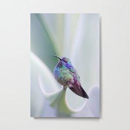 Hummingbird on Aloe Metal Print