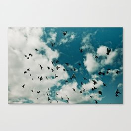 Birds 004 Canvas Print