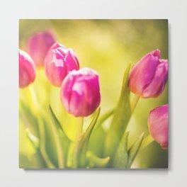 spring tulips flower Metal Print