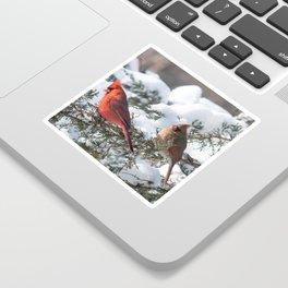 Sunny Winter Cardinals in the Adirondacks Sticker