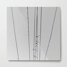 Birds On The Powerlines Metal Print