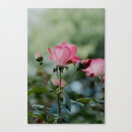 Rose by any other name... Canvas Print