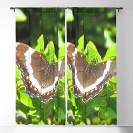 Watercolor Butterfly, White Admiral Butterfly 01, Middletown, Maryland Blackout Curtain