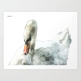 Swan in Watercolour Art Print