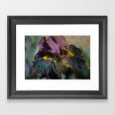 velvet iris Framed Art Print