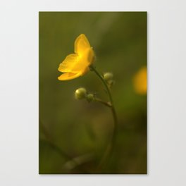 Summer Sunshine No 5 Buttercup Fields Canvas Print