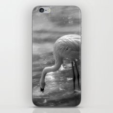 Flamingo, Fuerteventura. iPhone Skin