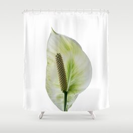 Peace Lily on White #1 #floral #decor #art #society6 Shower Curtain