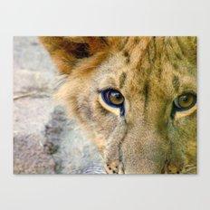 Lion Eyes Canvas Print