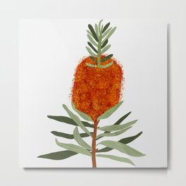 Bottlebrush Flower - White Metal Print
