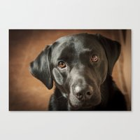 labrador Canvas Prints featuring Black Labrador   by Simon's Photography