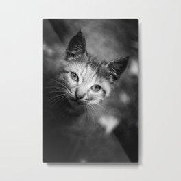 Nice cat Metal Print