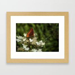 Butterfly on a Hydrangea 2 Framed Art Print