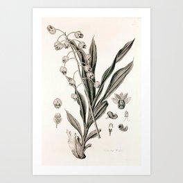Catasetum hookeri Art Print
