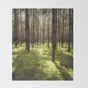 FOREST - Landscape and Nature Photography by ewkaphoto