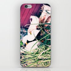 Tail Feathers Country Barn Print iPhone & iPod Skin