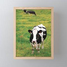 Holstein dairy cattle Framed Mini Art Print