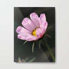 Cosmos named Sea Shells Pink Metal Print