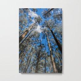 Tall Timber Metal Print