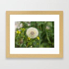Dandelion in a spider's web Framed Art Print